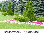 flowerbed. beautiful bushes | Shutterstock . vector #475868851