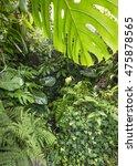 tropical rain forest | Shutterstock . vector #475878565