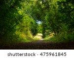 Mystical Walk Trough Beautiful...