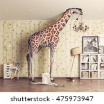 Giraffe breaks the ceiling in...