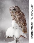 Winter Wildlife Scene With Owl...