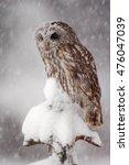 Winter Wildlife Scene With Owl...