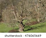 Small photo of The owl in the tree trunk. Paul Boswell's painting of an owl on a tree trunk, in Stourhead landscape garden, near to Stourton, Wiltshire, Great Britain