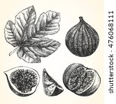 Hand Drawn Illustration Of Fig...