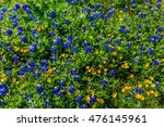 A Closeup Of A Cluster Of...