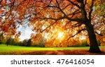 beautiful oak tree on a lawn... | Shutterstock . vector #476416054