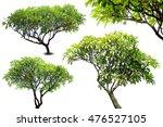 green fresh leaf isolated white ... | Shutterstock . vector #476527105