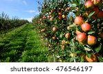 Apples On A Farm
