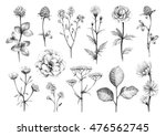 pencil drawings of wild flowers | Shutterstock . vector #476562745