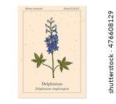 alpine delphinium  delphinium...