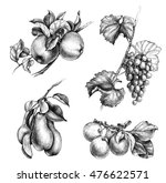 hand drawn fruit set.... | Shutterstock . vector #476622571