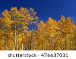 Colorado Forest Of Gold And...