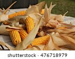 Small photo of Many ripe corn cob scattered in disarray with dry leaves around