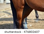 horse | Shutterstock . vector #476802607