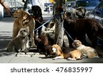 Stock photo dogs in new york city 476835997