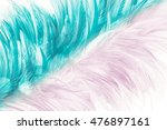 Colorful Feather