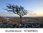 Lone Tree On Limestone Outcop...