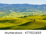 tuscan rural landscape in the... | Shutterstock . vector #477021835