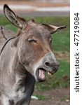 Comical Looking Donkey With...
