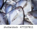 Small photo of Scientific name: Bramidae , Higher classification: Percoidea Fresh Pomfret for sale in the market.