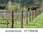 Attractive vineyard in the spring in Northern California - stock photo