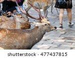 nara deer  | Shutterstock . vector #477437815
