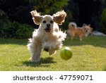 Stock photo two dogs are playing and chasing each other 47759071