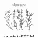 black isolated lavender... | Shutterstock .eps vector #477701161