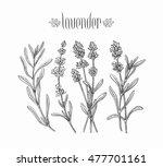 black isolated lavender... | Shutterstock .eps vector #477701161