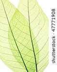 green leaves background | Shutterstock . vector #47771908