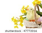 easter little duck and eggs... | Shutterstock . vector #47772016