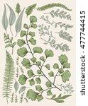 leaf set. vintage floral... | Shutterstock .eps vector #477744415