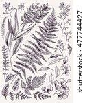 leaf set. vintage floral... | Shutterstock .eps vector #477744427