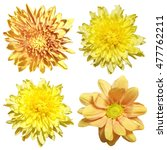 Chrysanthemum Flowers On A...