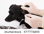 close up of a vet cleaning dog... | Shutterstock . vector #477776845