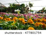 Flowers At The Green House....