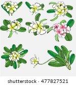 set of flowers frangipani... | Shutterstock .eps vector #477827521