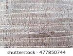 Palm Tree Bark Texture Wallpaper