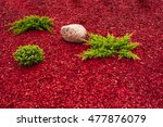 Landscape With Stones And Red...