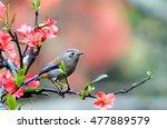 blue winged minla | Shutterstock . vector #477889579
