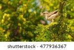 flora and fauna concept. little ... | Shutterstock . vector #477936367