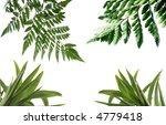 multi coloured flowers on white | Shutterstock . vector #4779418