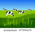 vector illustration. white cow... | Shutterstock .eps vector #477994174
