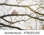 Two Pair Couple Wild Eurasian...