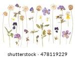 dry pressed wild flowers... | Shutterstock . vector #478119229