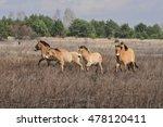 wild horses in chernobyl zone | Shutterstock . vector #478120411