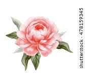 realistic watercolor peony... | Shutterstock . vector #478159345