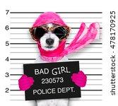 Diva Lady Girl  Dog Posing For...