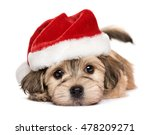 Stock photo close up of a cute lying bichon havanese puppy dog in christmas hat isolated on a white 478209271