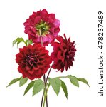 Dahlia Flower Isolated On Whit...